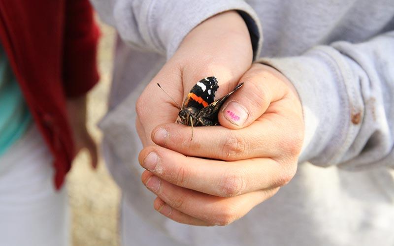 Sommerfugl i hendene
